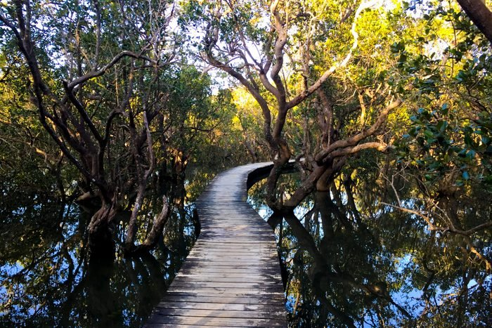 Eco Tours at Daintree National Park