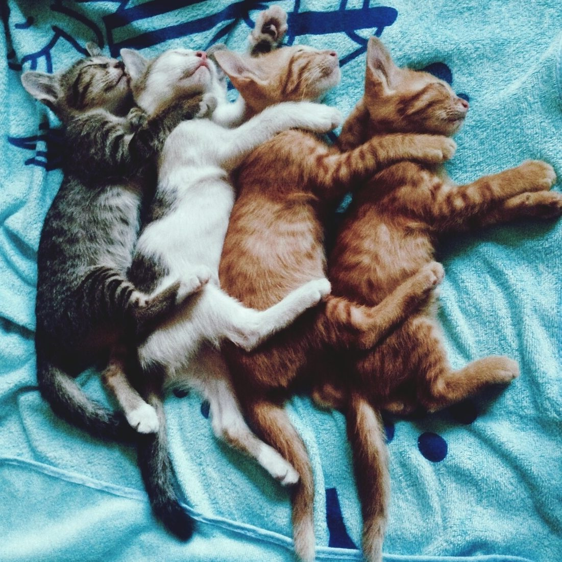 High Angle View Of Kittens Sleeping On Bed