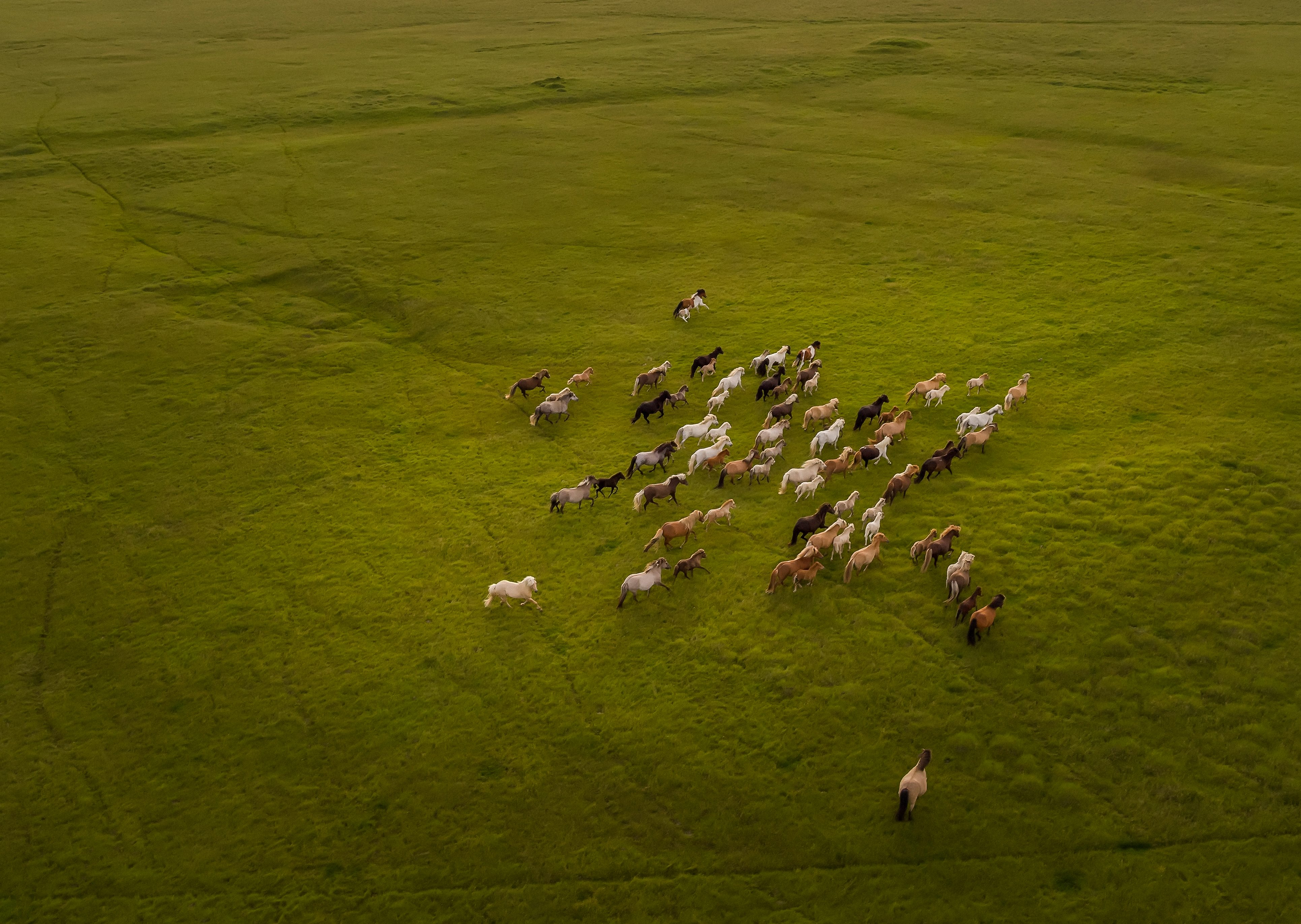 Top view of Horses Running