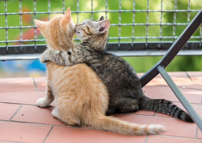 Two Kittens sitting on balcony