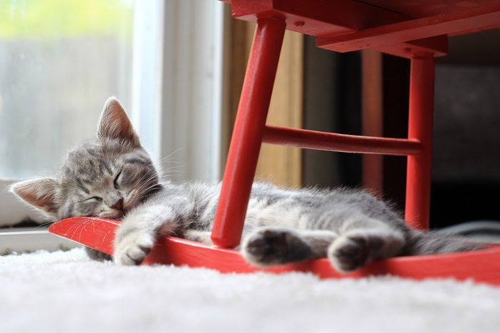 Close-Up Of Cat Relaxing At Home