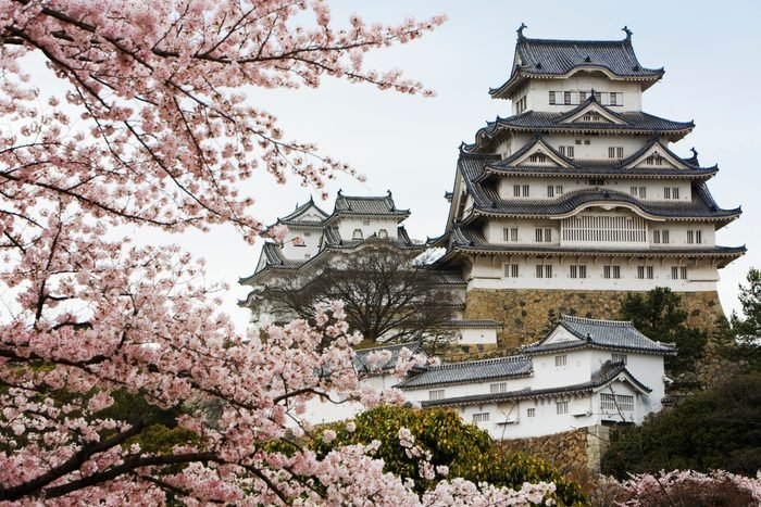 Himeji Castle with Cherry Blossom trees