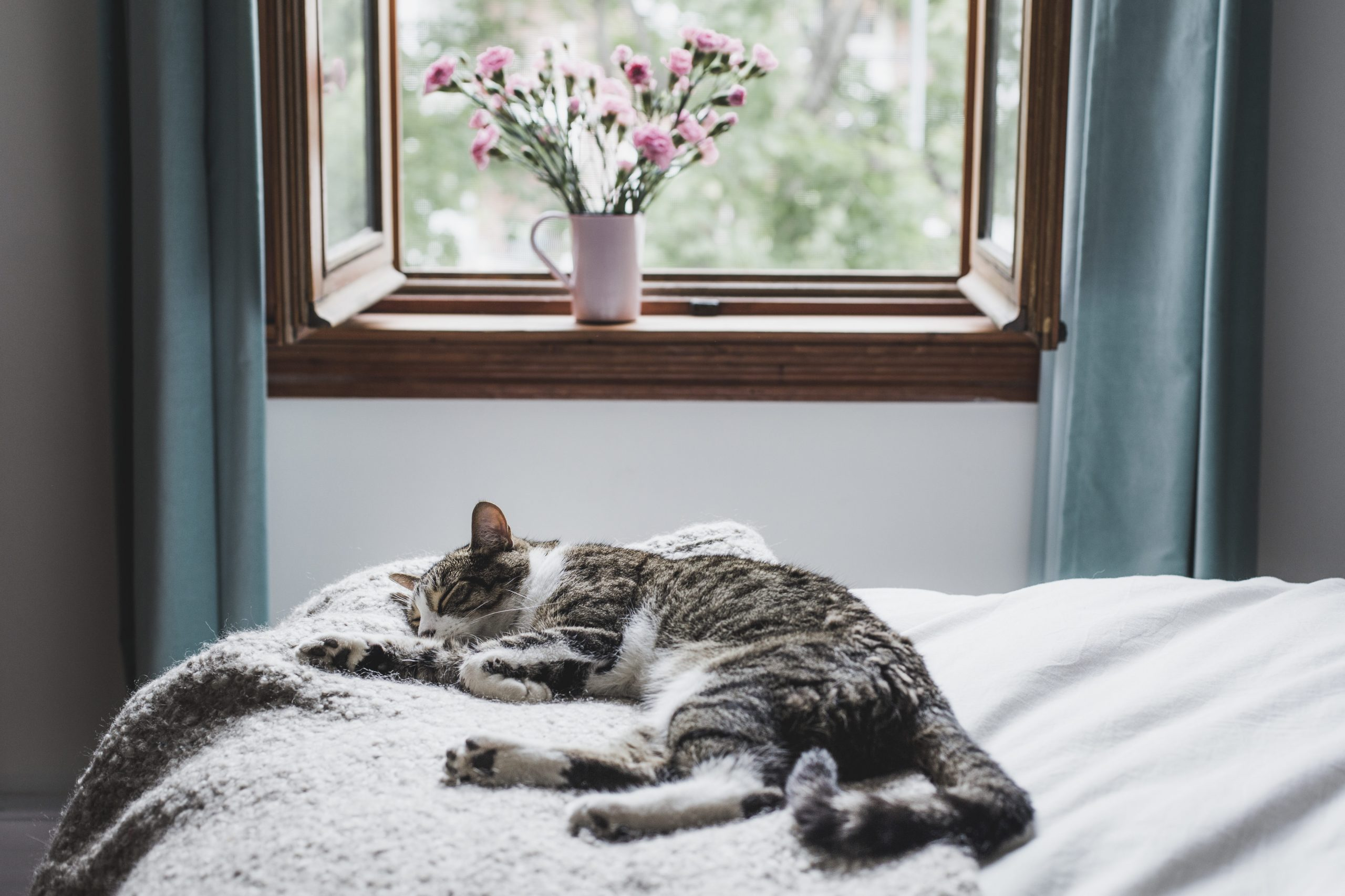 Tabby cat sleeping on a bed