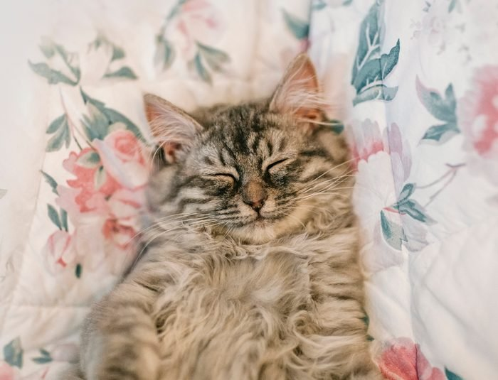 Sleeping cute kitten with smile