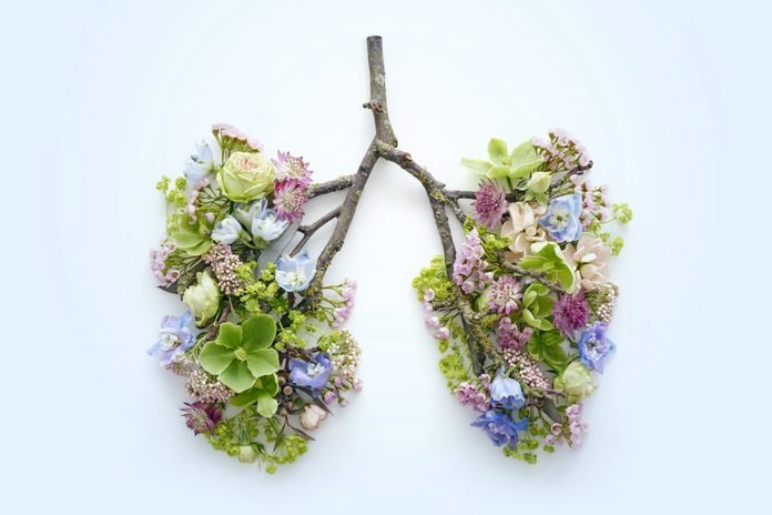 Spring flowers representing human lungs