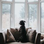 How to Help Your Pet Cope with Post-Quarantine Separation Anxiety