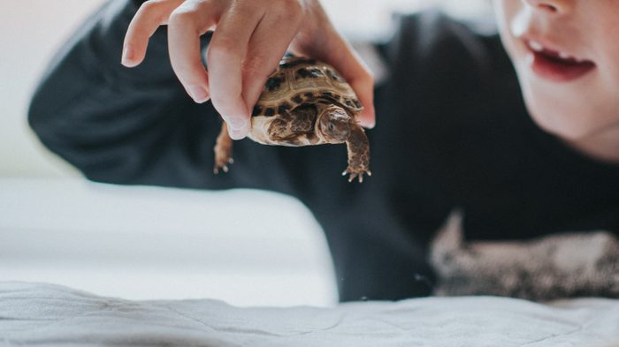 Young child holding a small tortoise