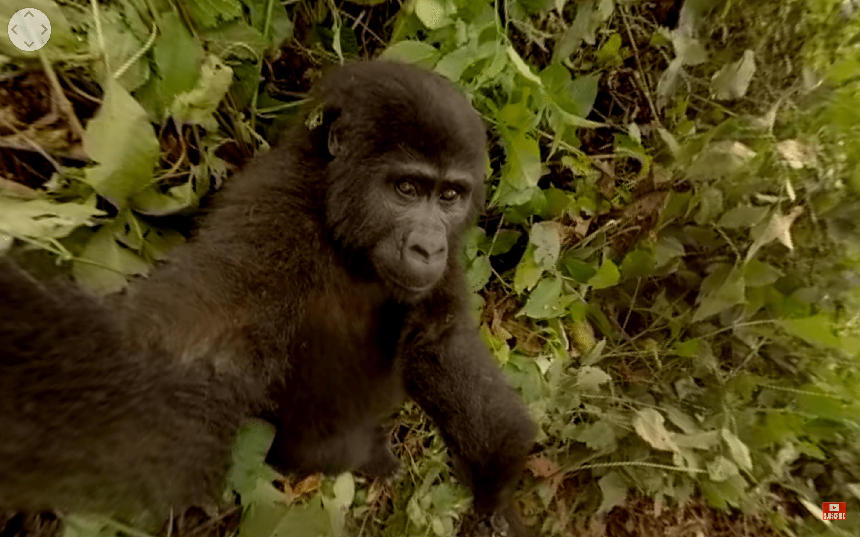 gorilla vr screenshot