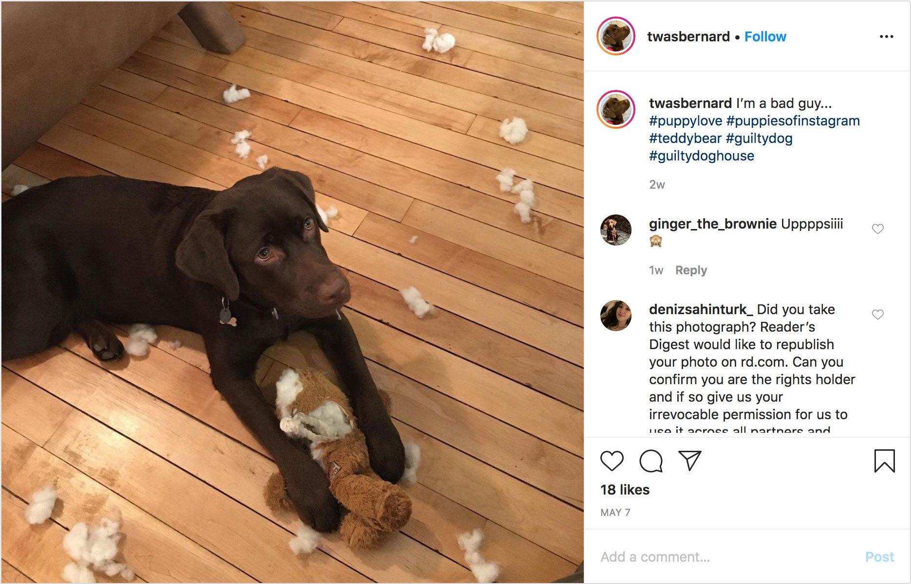 twasbernard on instagram. guilty dog.