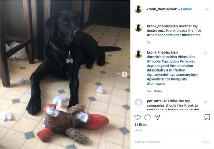 kronk_theblacklab on instagram. guilty dog