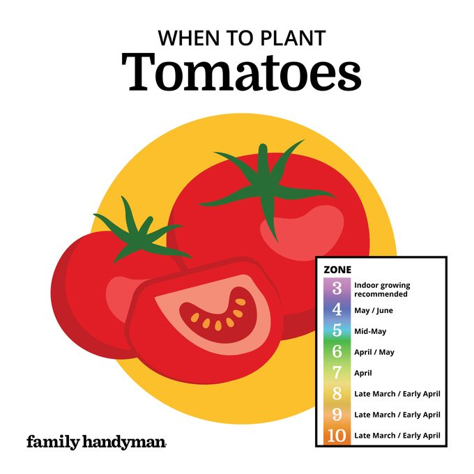 when to plant tomatoes. chart and illustration.