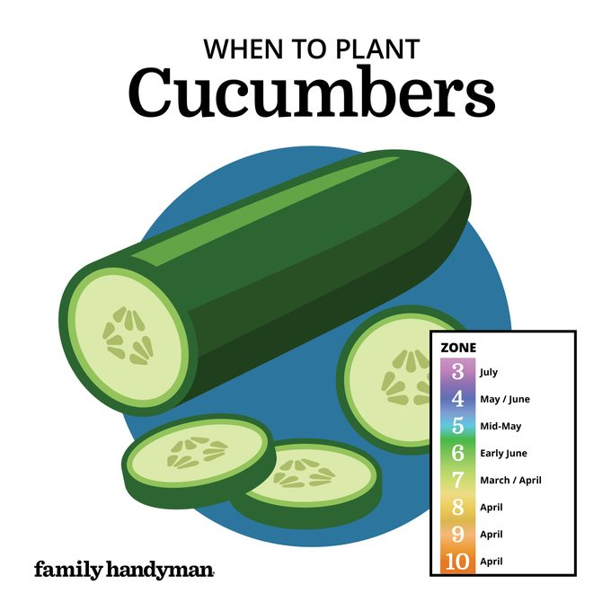 when to plant cucumbers. chart and illustration.