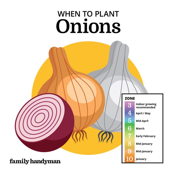 when to plant onions. chart and illustration.