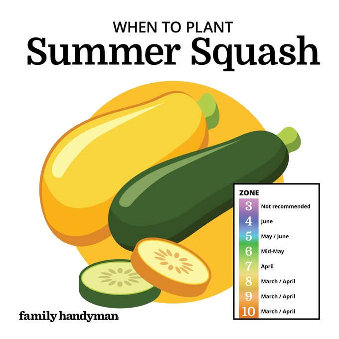 when to plant summer squash. chart and illustration.