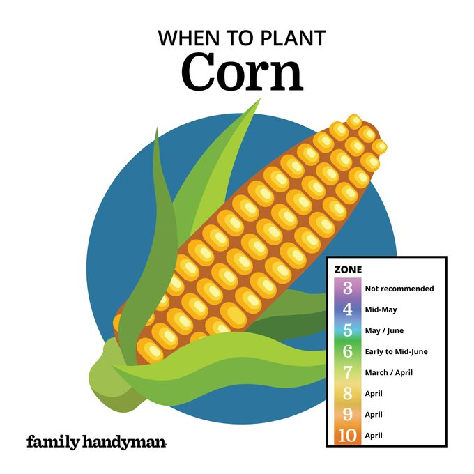 when to plant corn. chart and illustration.