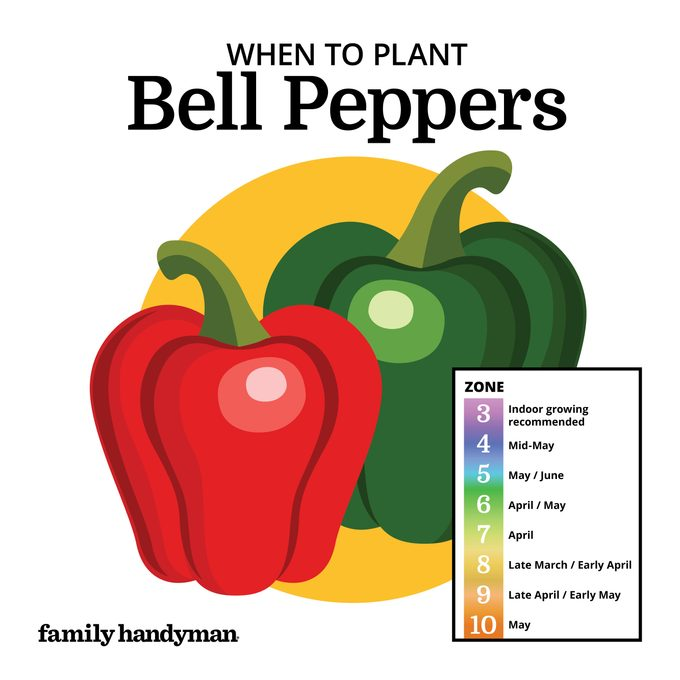 when to plant bell peppers. chart and illustration.