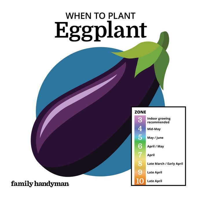 when to plant eggplant. chart and illustration