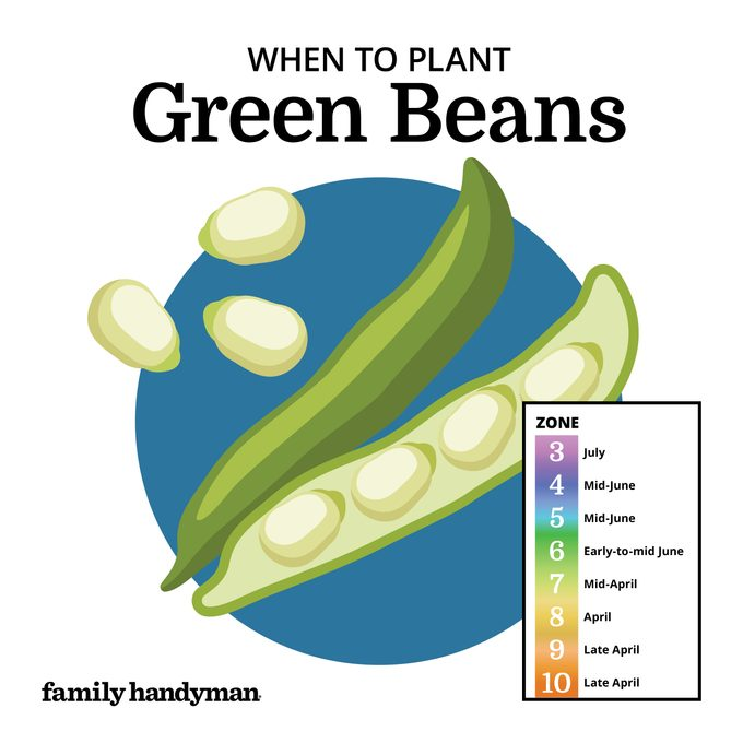 when to plant green beans. chart and illustration.
