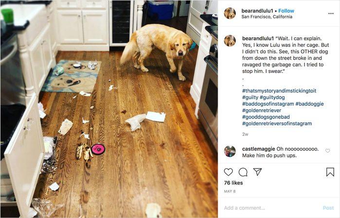 bearandlulu1 on instagram. guilty dog.