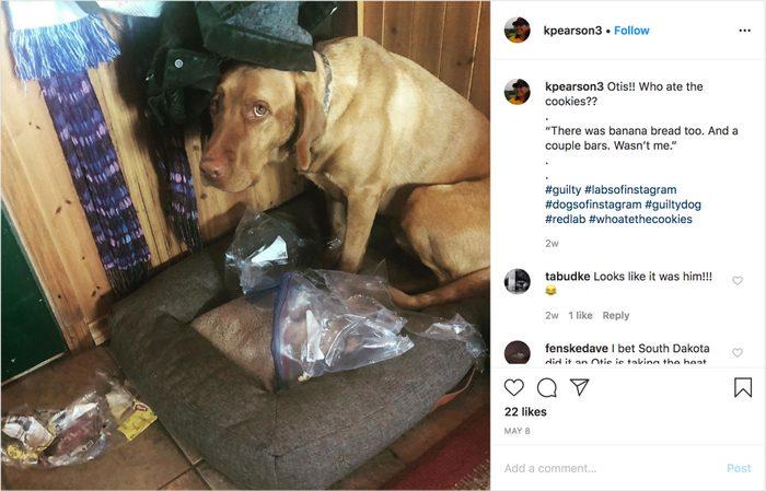 kpearson3 on instagram. guilty dog.