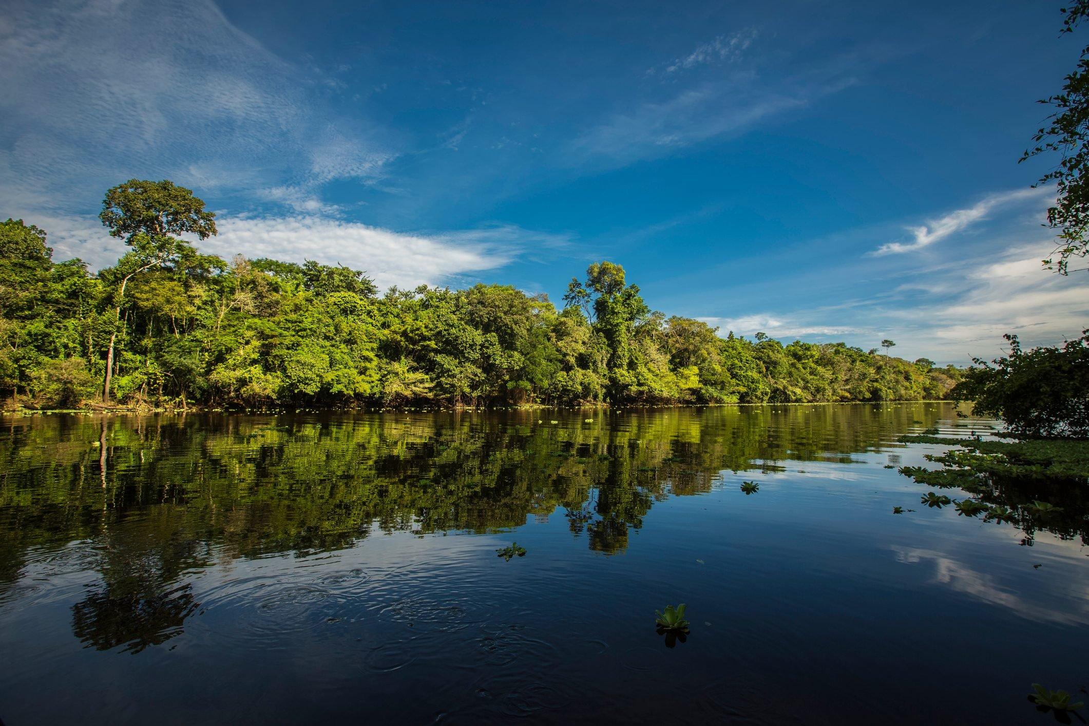 Peruvian Rainforest - Madre de Dios - Peru