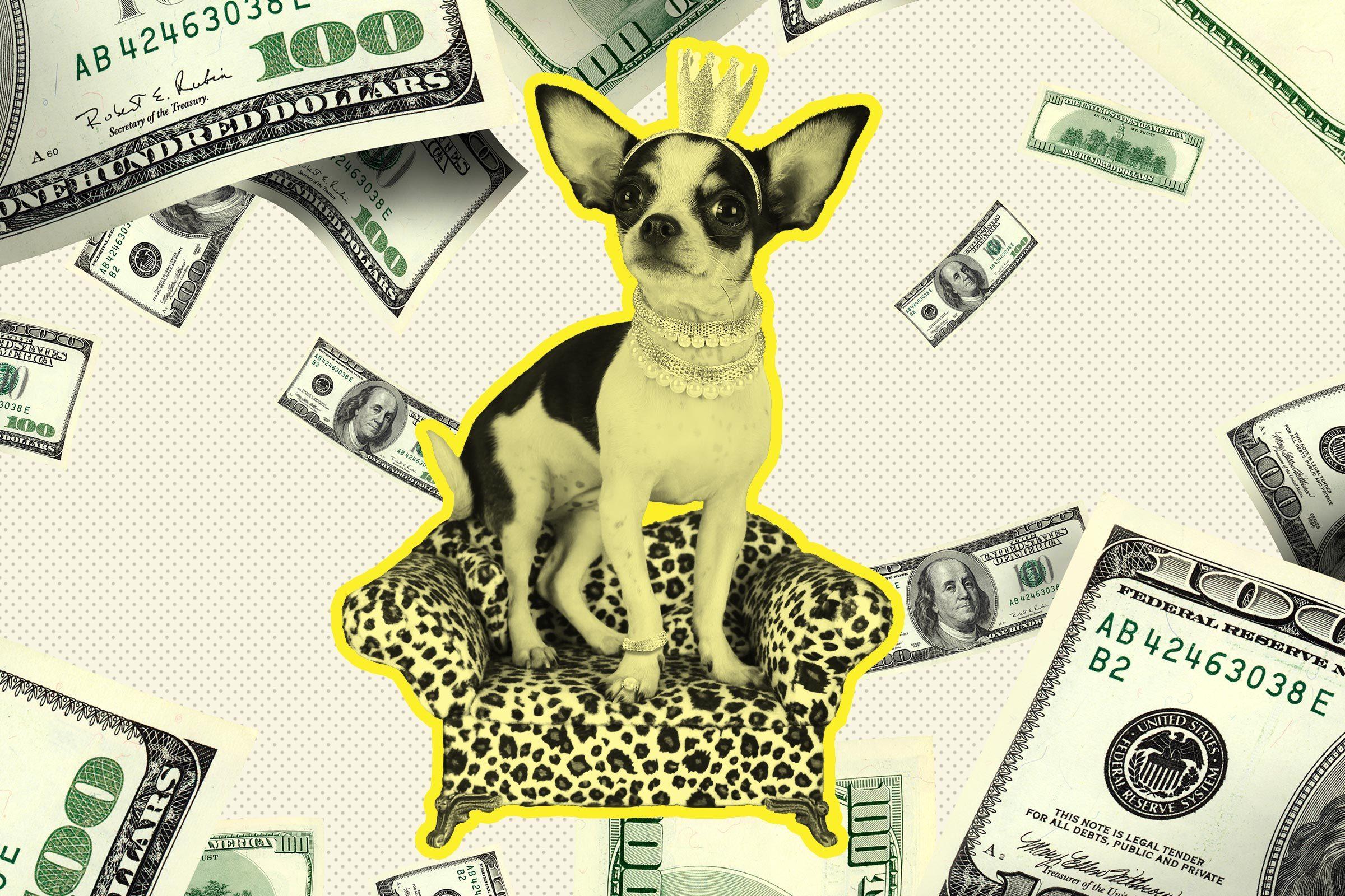 Lap (dog) of luxury