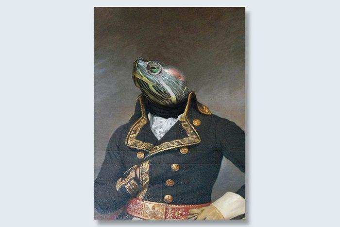 admiral turtle dogeface pet portrait