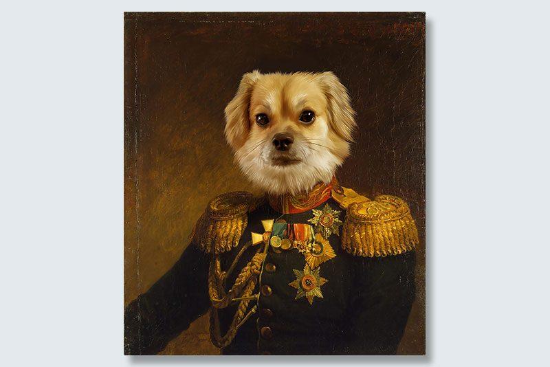 general fluff dogeface pet portrait