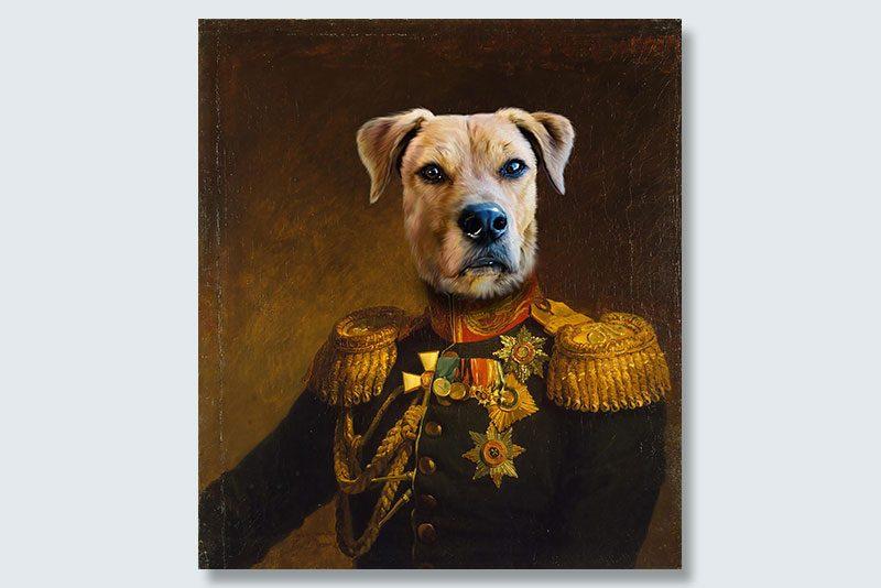 staredown general dogeface pet portrait