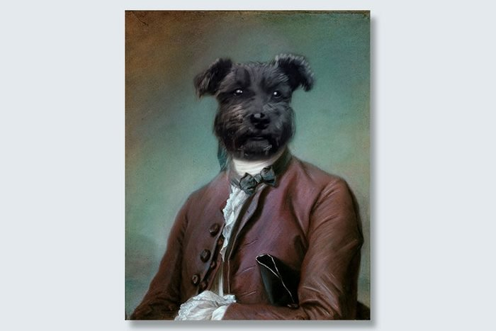 ambassador scruff dogeface pet portrait