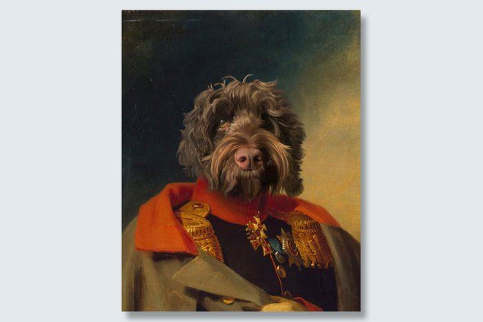 commander doodle dogeface pet portrait