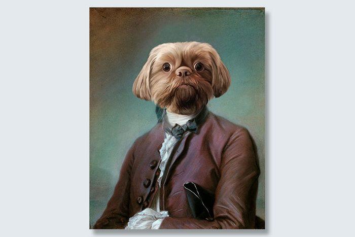 wide-eyed dogeface pet portrait