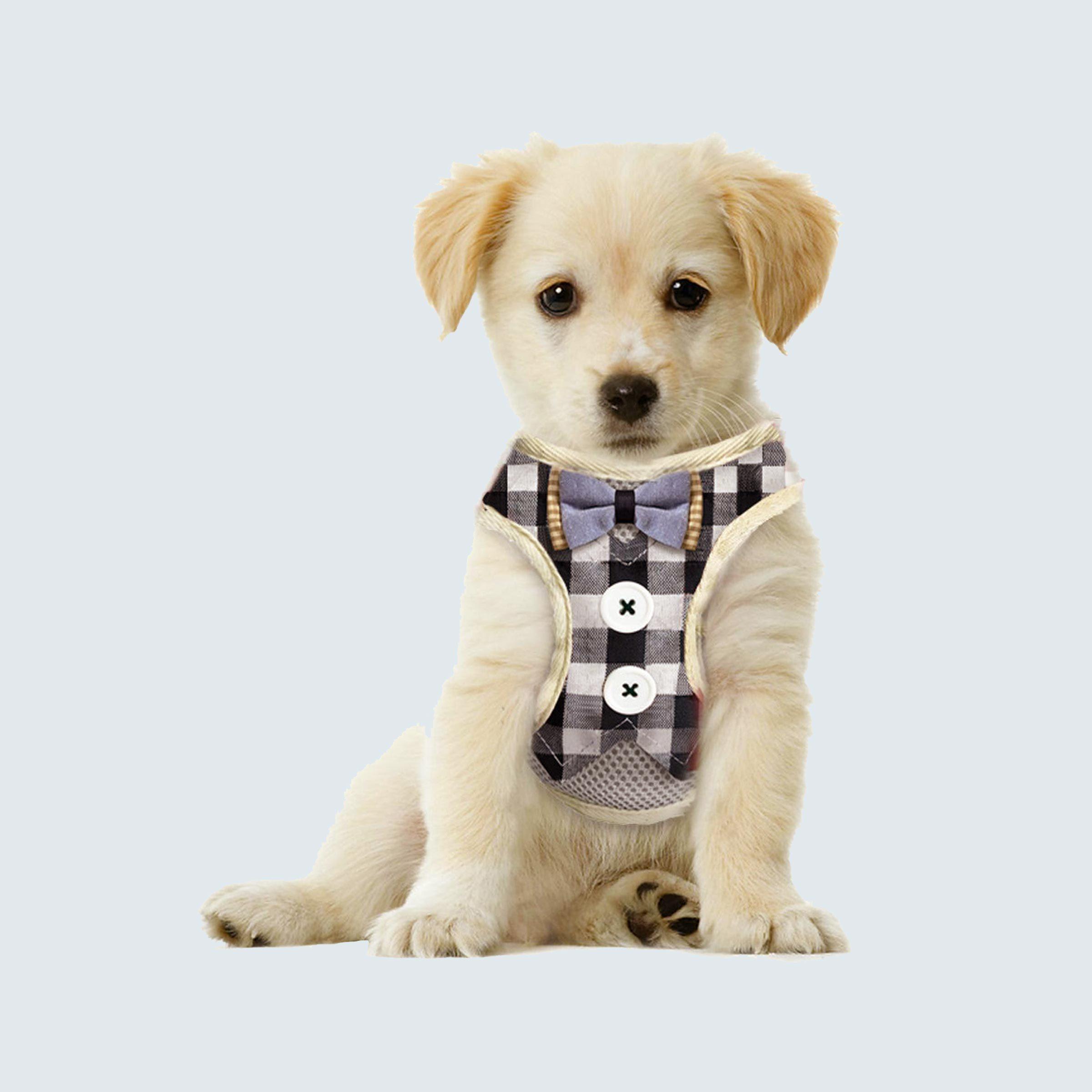 BarkLover Adjustable Dog Tuxedo Harness