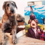 20 Funny Pet Portraits You Can Make for Your Own Pet