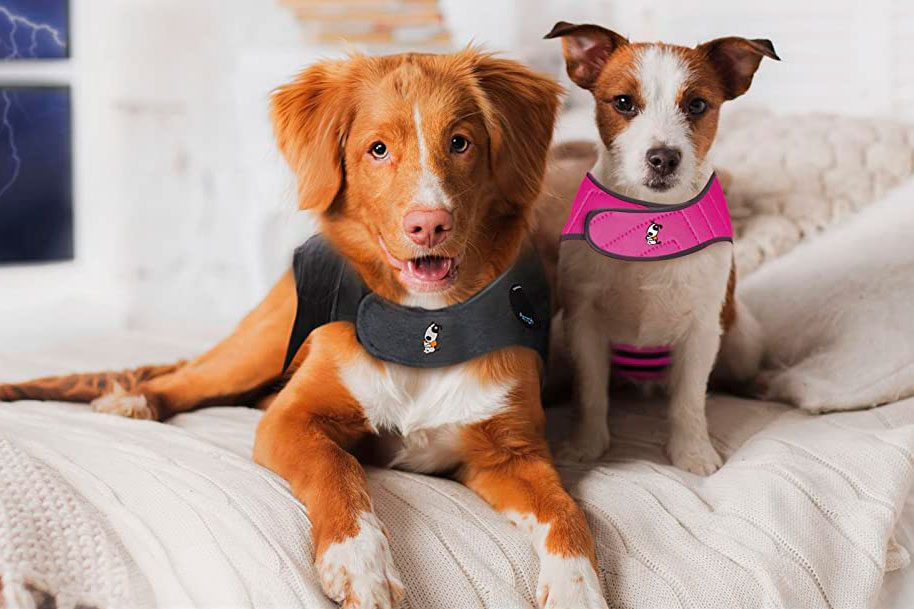 dogs wearing thunder shirts