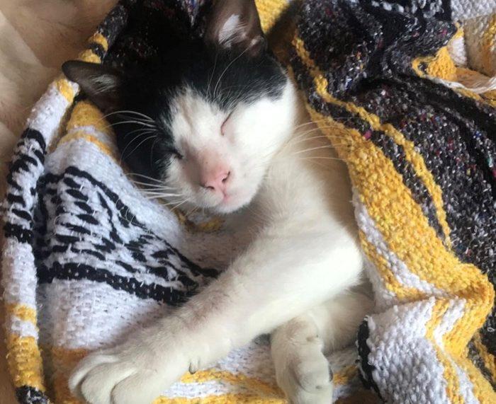 Louisiana SPCA Bob cat adoption