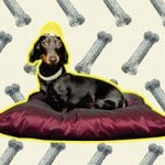 Most Extravagant Things People Have Done to Honor Their Pets