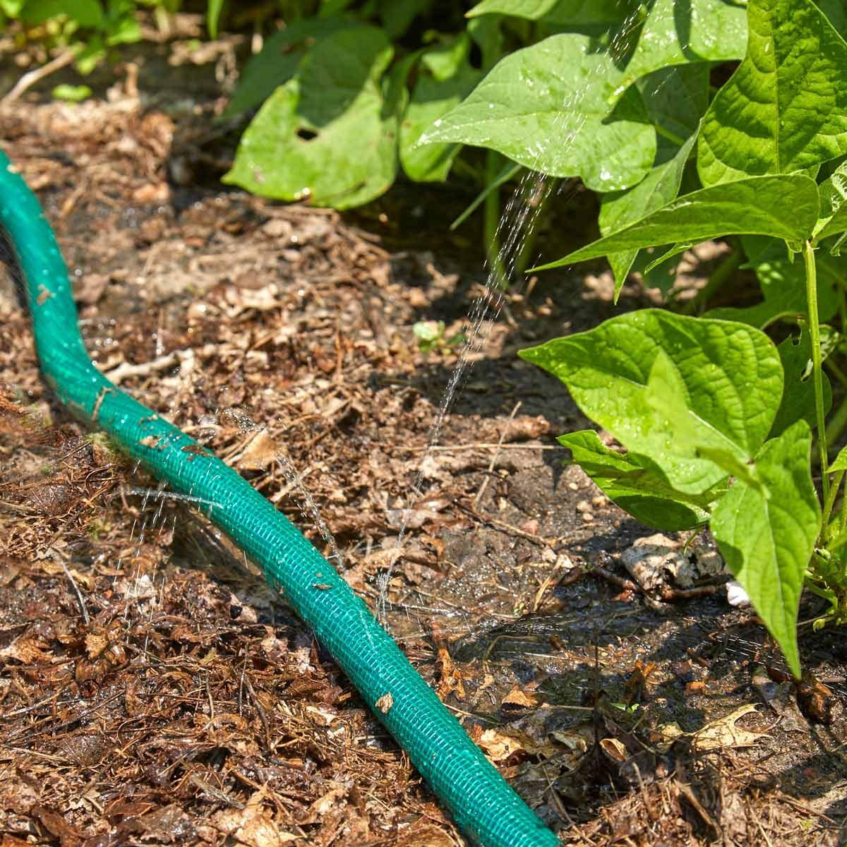 HH DIY hose drip waterer