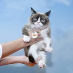 The 12 Most Famous Cats in Pop Culture History