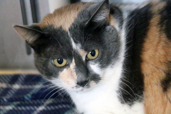 Sheridan Dog & Cat Shelter frey cat