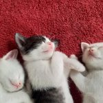 50 of the Cutest Photos of Sleeping Kittens