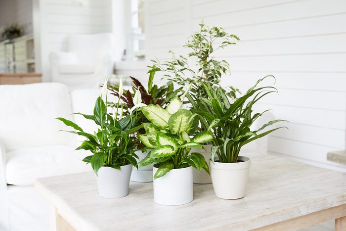 Group of plants on table