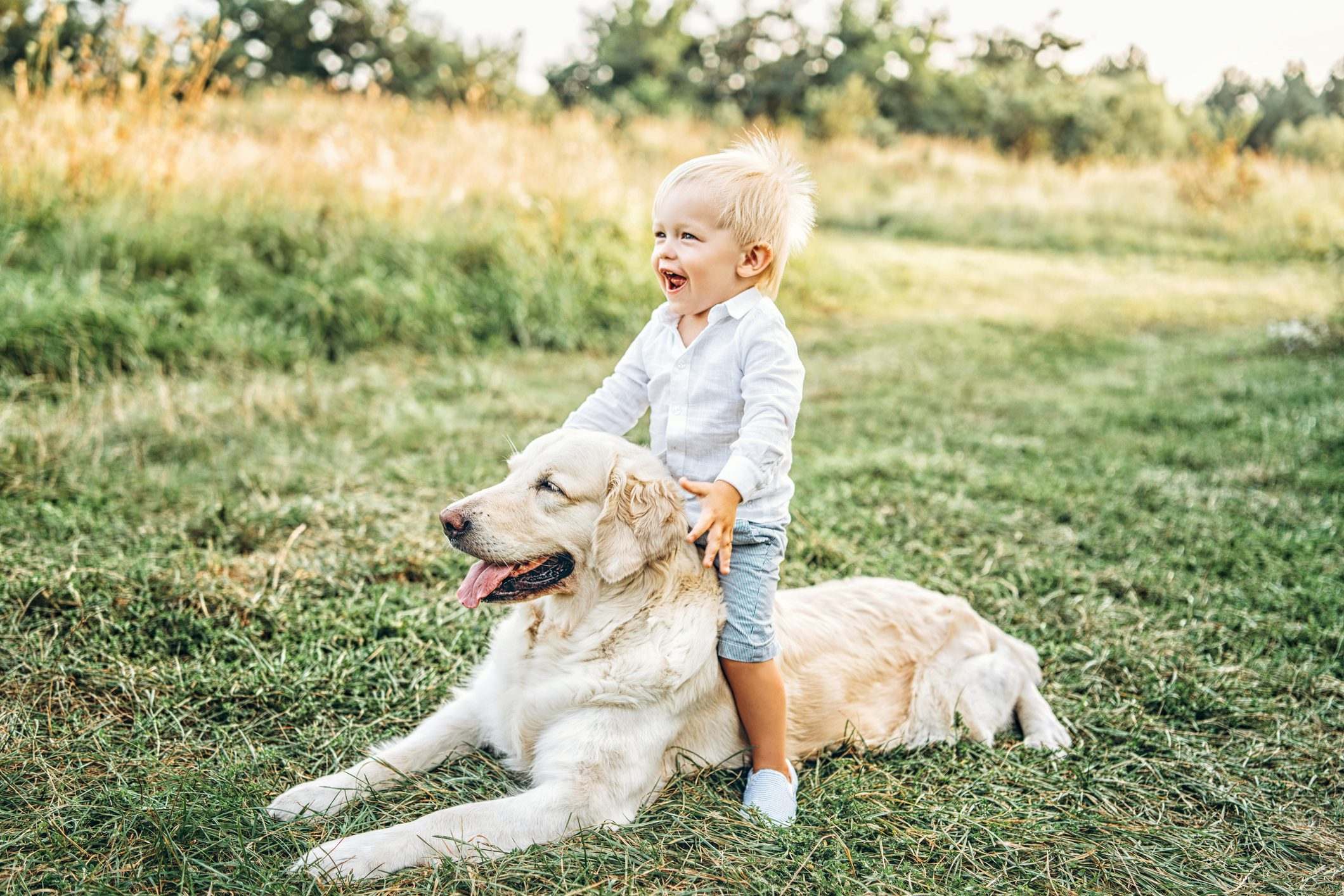 Smiling Boy With Dog Sitting On Field