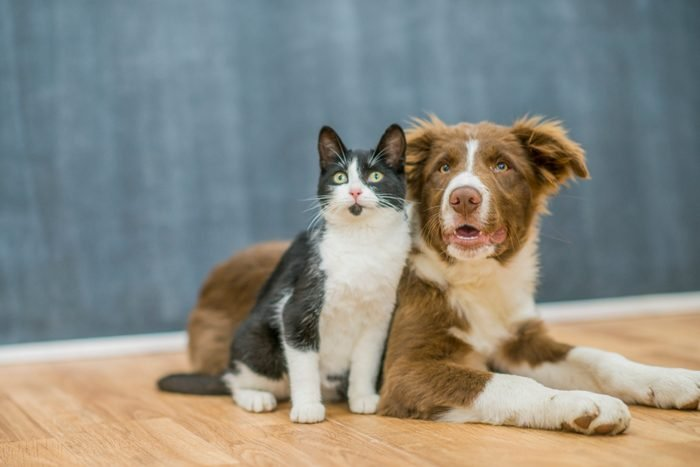 Cute cat and dog portrait