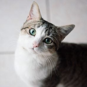 Cute young tabby and white cat with big green eyes, looking up at camera