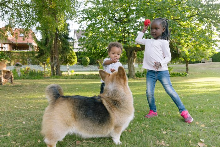 cute toddler play with a dog in garden