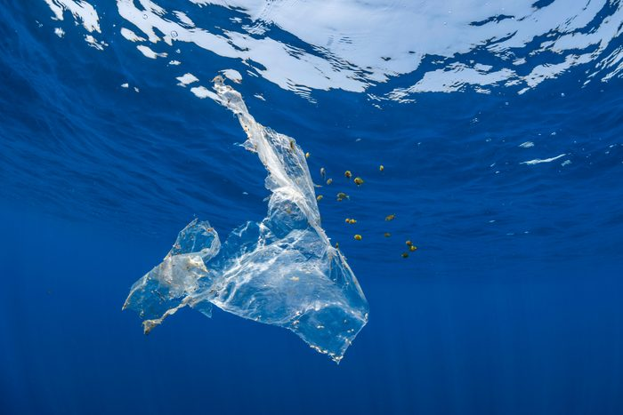 Piece of plastic floating in the open ocean which has been opportunistically colonized by some nudibranchs and molluscks as well as providing shelter to a school of tropical fish which are feeding on algae attached to it, Indian Ocean, Sri Lanka.