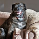 11 Dog Breeds That Can Be Left Alone