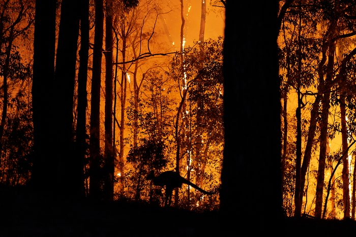 Emergency Warning Issued For Hawkesbury As Bushfire Nears Sydney Outskirts