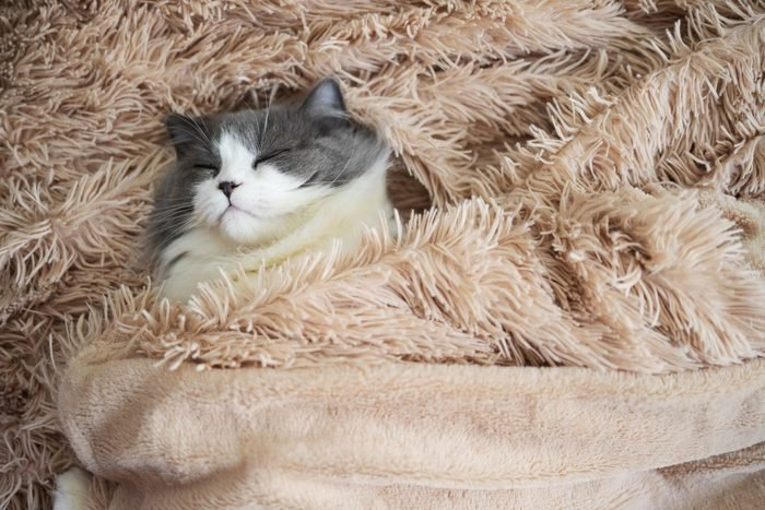cat sleeping in fluffy rug